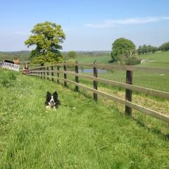 Equine / Horse Fencing