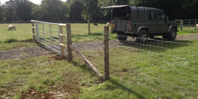 Sheep and horse fencing…